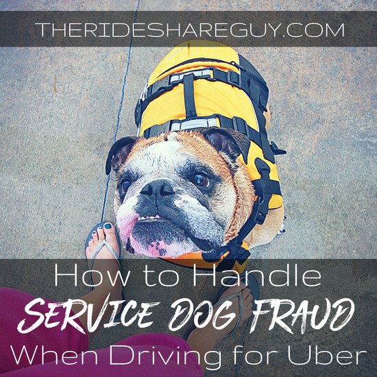 How to Handle Service Dog Fraud As An Uber Driver