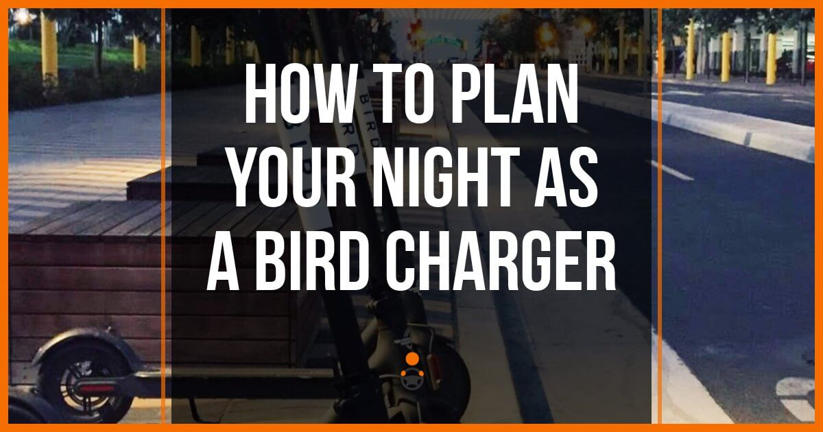 Planning Your Night as a Bird Charger (Strategy, Tips & Tricks)
