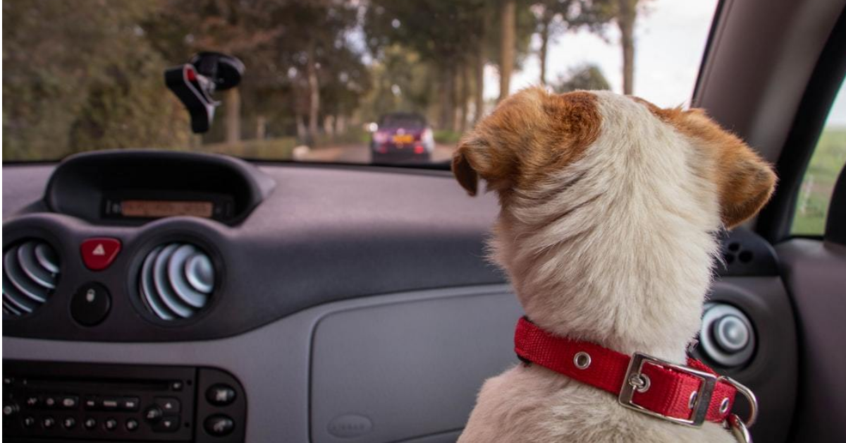 Uber Pet: Get Paid More to Transport Passengers' Pets